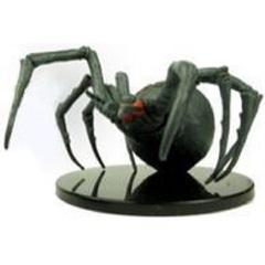 Giant Caveweaver Spider