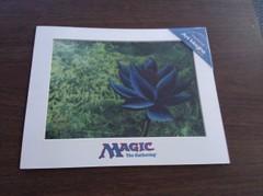 Black Lotus Chroma-Cel (Limited Edition)