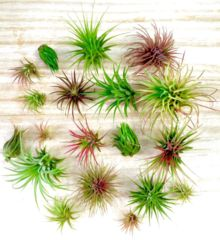 Large Single Air Plant