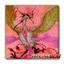 Vennu, Bright Bird of Divinity - MACR-EN097 - Common ** Pre-Order Ships May.5